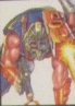 1993 Muskrat thumb.png